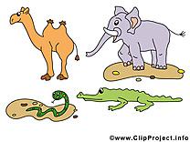 Chameau éléphant clipart – Animal dessins gratuits