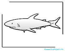 Coloriage requin clip arts gratuits – Animal illustrations