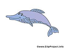 Dauphin images – Animal clip art gratuit