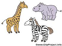 Girafe zèbre image gratuite – Animal cliparts