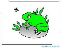 Grenouille dessins gratuits – Animal clipart