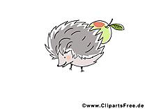 Hérisson dessin – Animal cliparts à télécharger