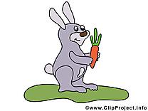 Lapin images – Animal dessins gratuits