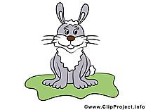 Lièvre dessin à télécharger – Animal images