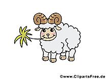 Mouton clip art gratuit – Animal dessin