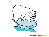 Ours polaire dessin gratuit – Animal image
