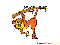 Singe illustration – Animal images