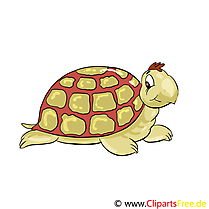 Tortue illustration – Animal images
